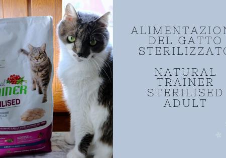 Gatto sterilizzato – la giusta alimentazione per mantenerlo in salute