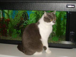 mia gatta