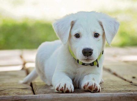 Cane in arrivo – Le cose da comprare quando si prende un cane